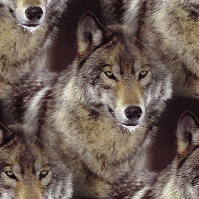 Wolf Background Seamless Repeating Tile Fill